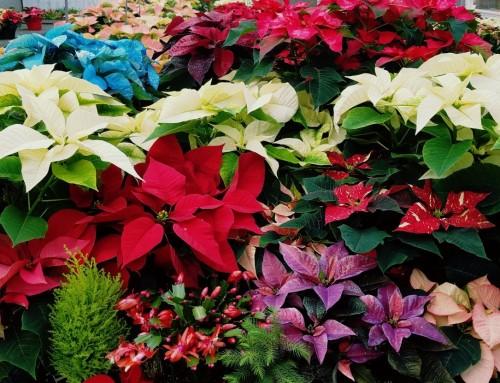 Minnesota Grown's December Feature