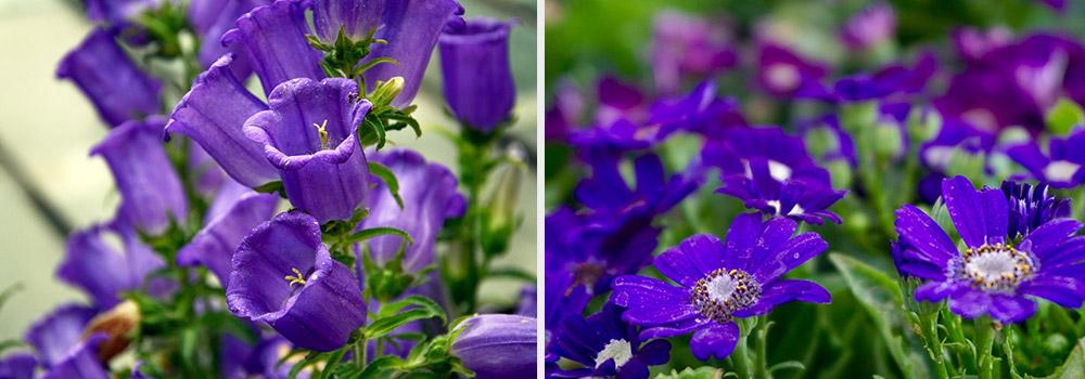 Ultra-violet flowers