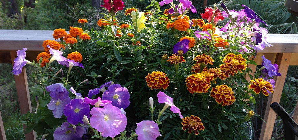 Container Garden with Marigolds, Petunias and other flowers