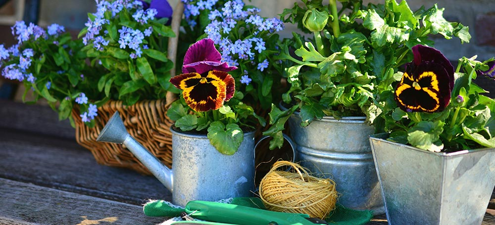 Flowers in pots with gardening tools