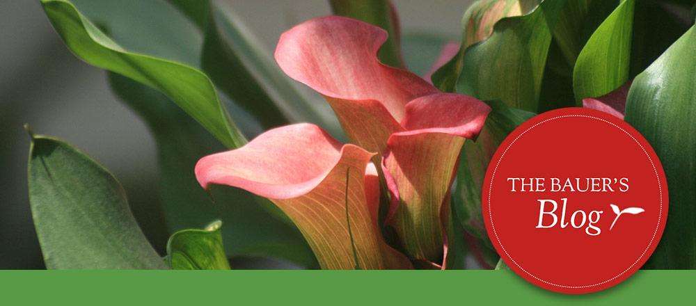 Tendering Plants Indoors