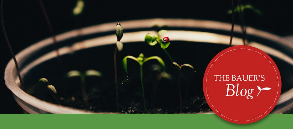 Seeding Basics