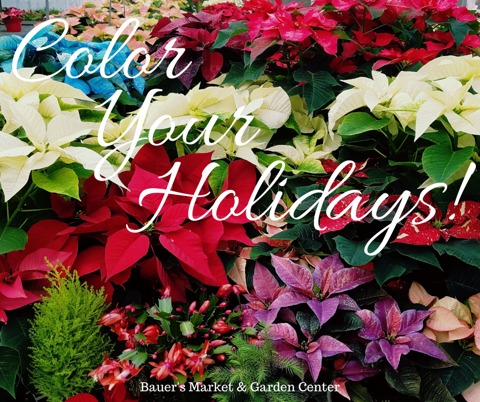 This Week at Bauer's Market & Garden Center | December 9, 2019
